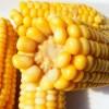Ученые не считают ГМО-кукурузу вредной для здоровья